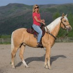 Tennessee Walking Horse with barn name of Arrow